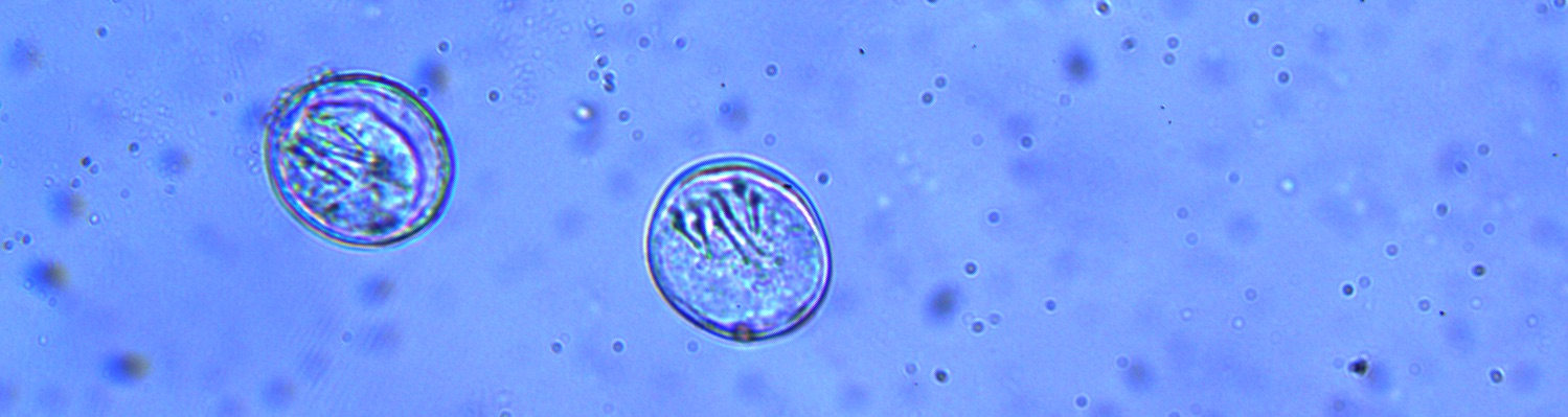 Identification and management of Endoparasites affecting animals