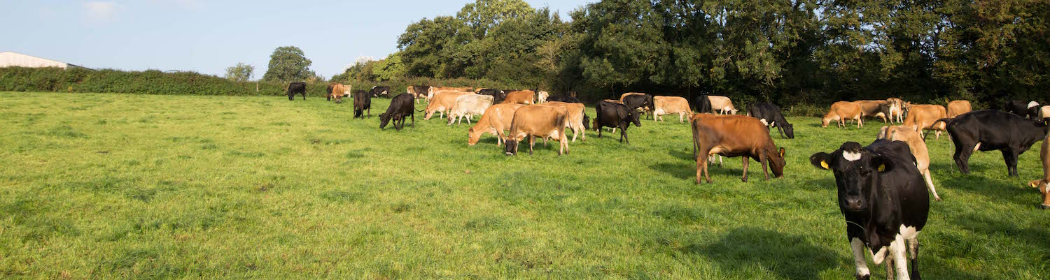 Pastural Larval Counts to help you manage your livestock worming strategy